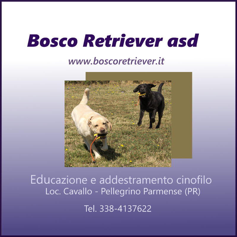 bosco retriever centro cinofilo